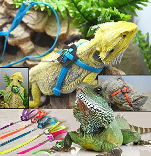 Flukers Repta Leash For Reptile X Large Dumuby